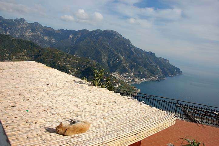 AMALFI CAT WITH A VIEW.jpg