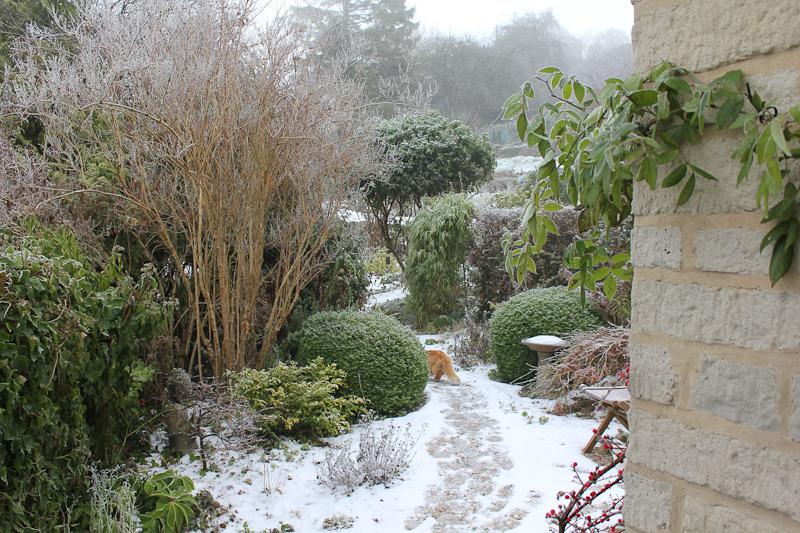 autumn-frost-2010-07.jpg