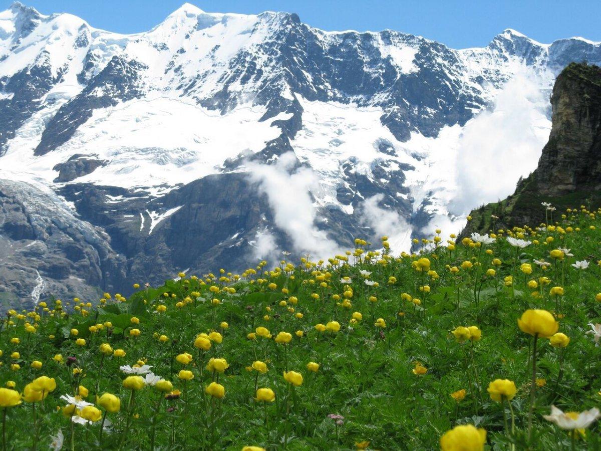 Flowers Switzerland.jpg