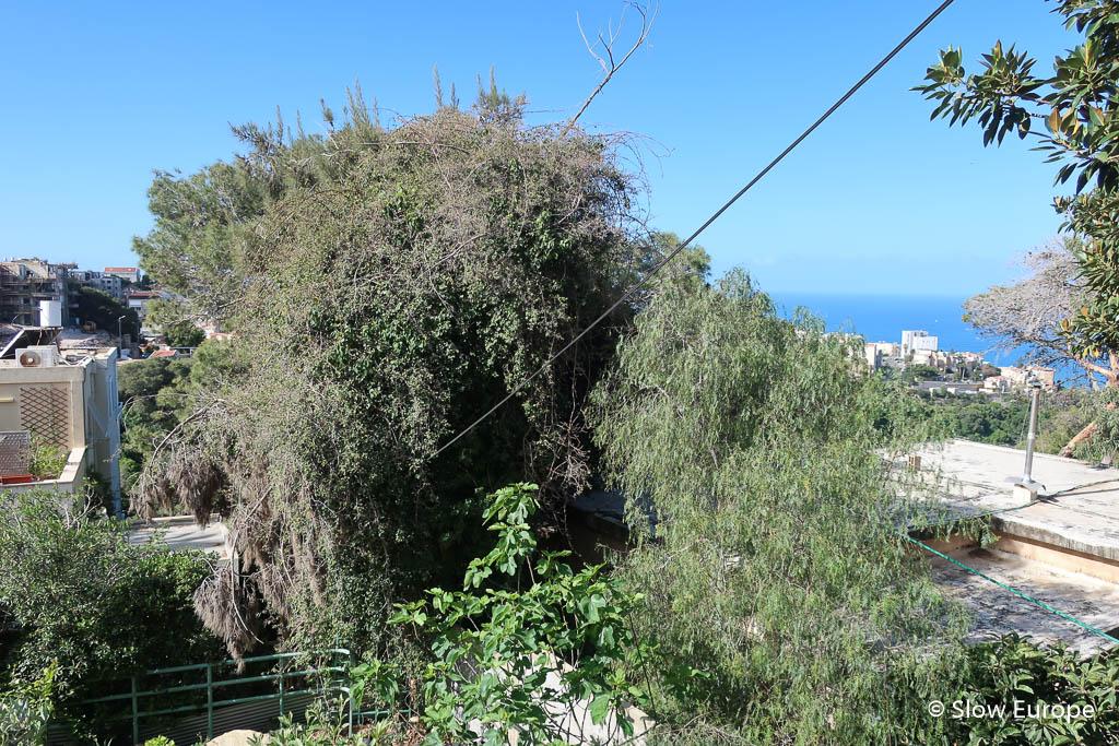 haifa-0812.jpg
