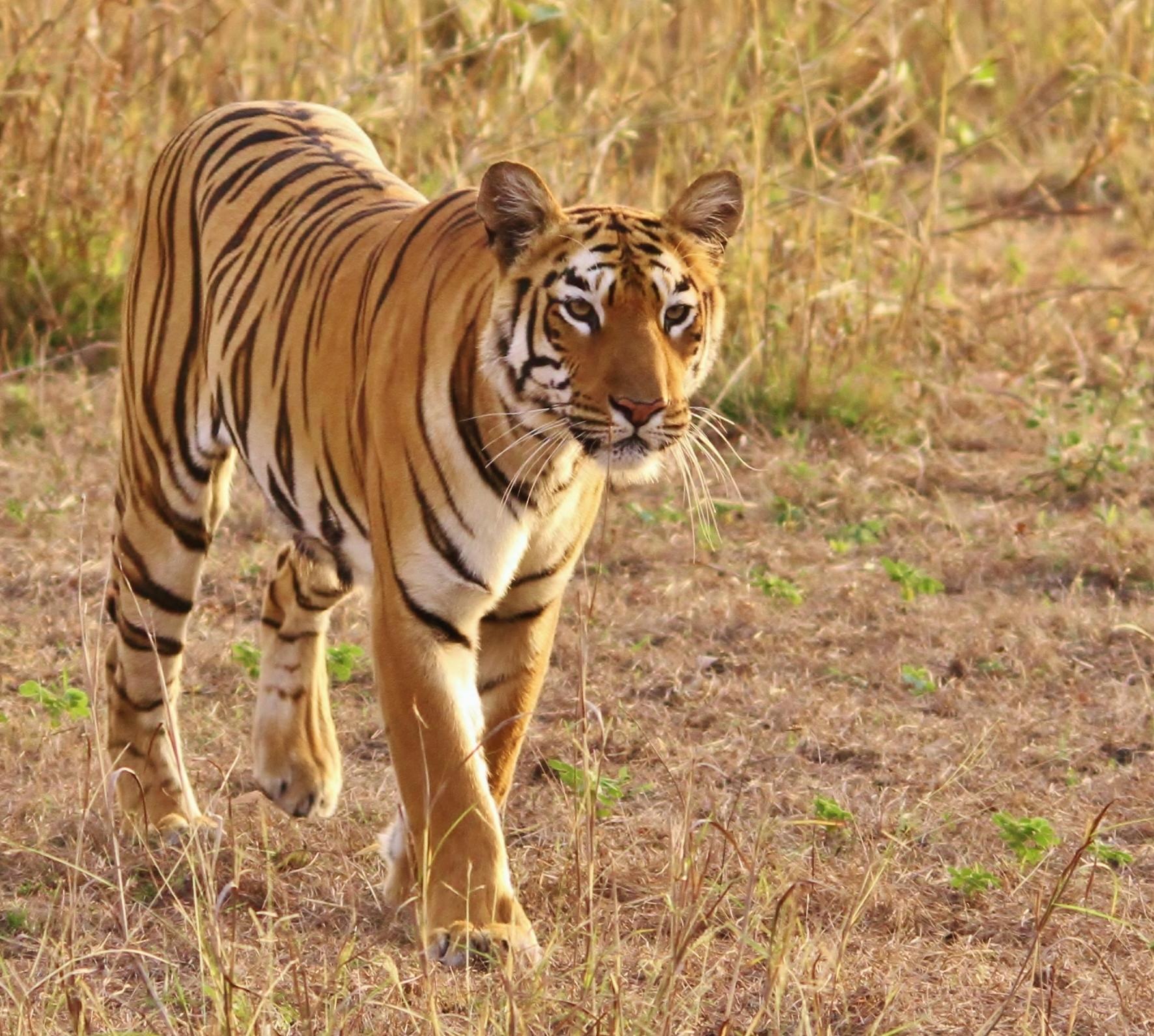 India 2014 GB 331.JPG