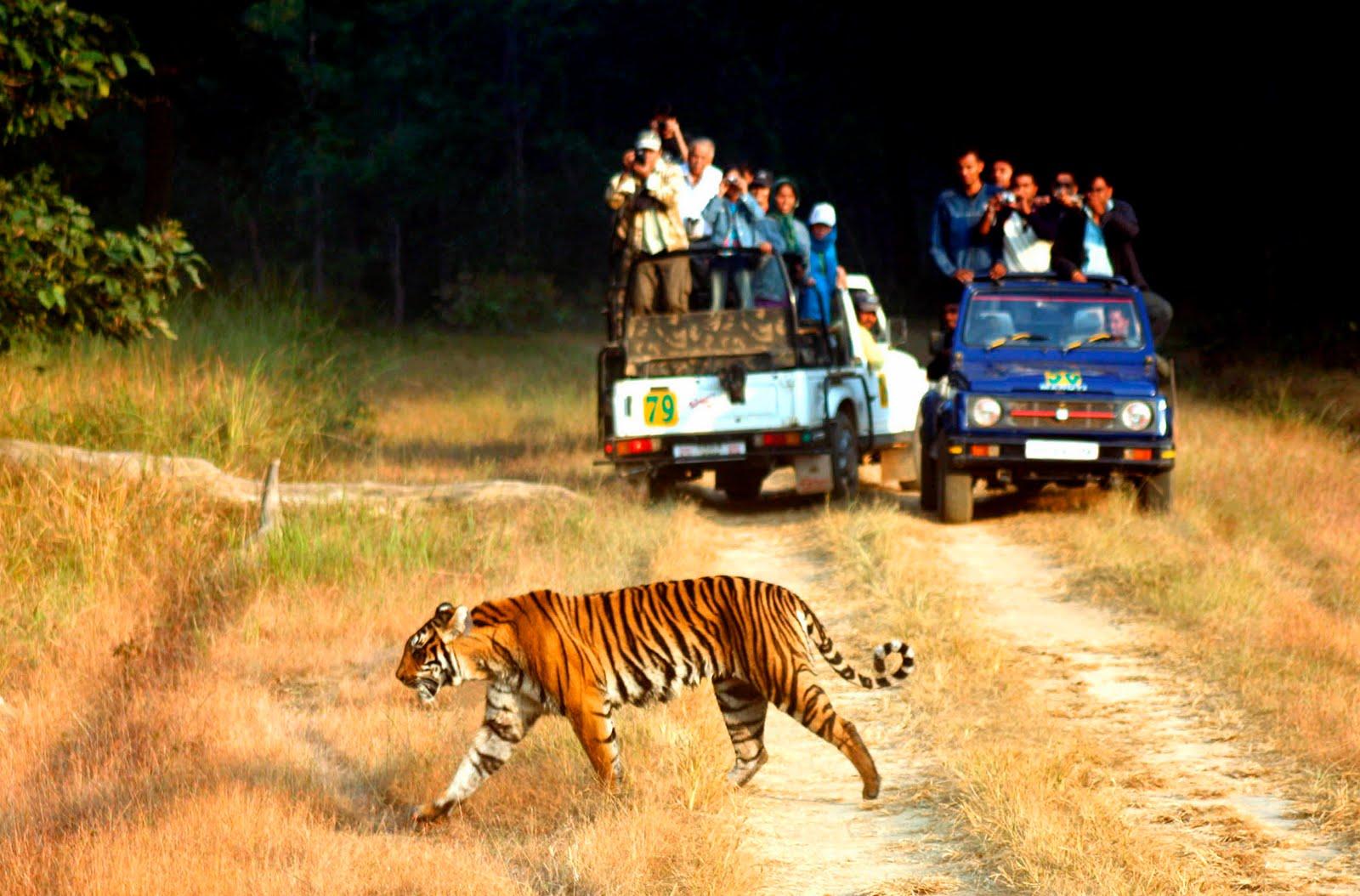 Jim_Corbett_National_Park_Wildlife_Tour_1.jpg