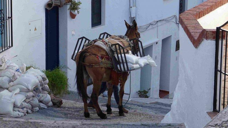 nerja frig donkey2.jpg