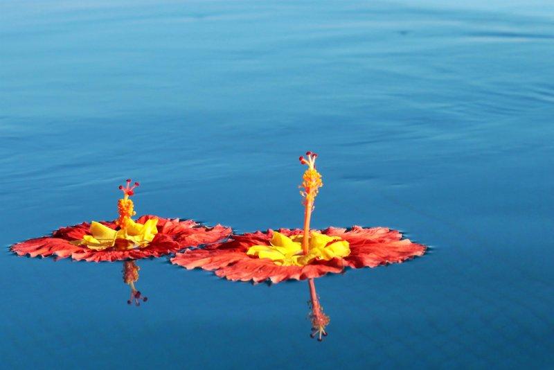 pool flower (2).jpg
