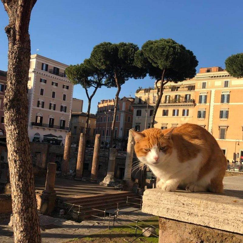 Rome Largo cat.jpg