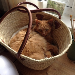 Buddy in a French Basket