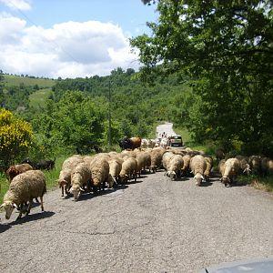 Basilicata traffic