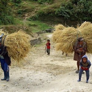 Carrying straw, near Radi, Bhutan