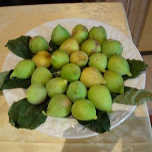 Fall figs, Umbria
