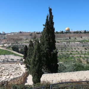 View of olive groves and Temple Mount