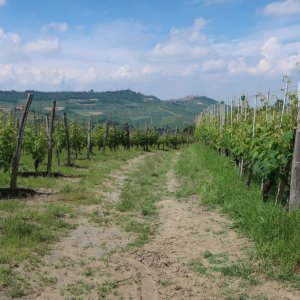 Hike - Barolo to Monforte