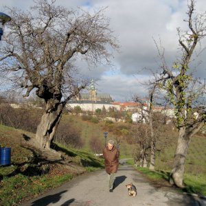Photo Hunt No. 31 - Tree(s)
