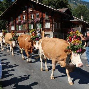 Lenk Cow Parade 2018