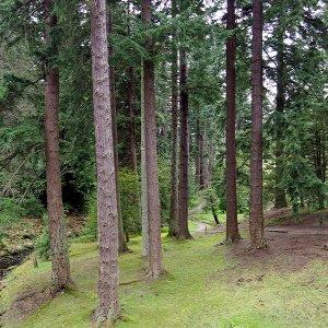 Pinetum, Cragside