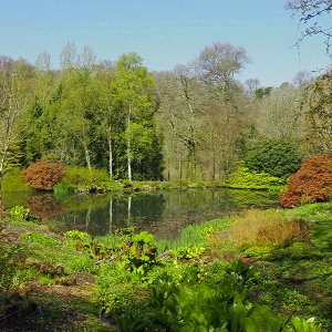 NHS Gardens Rosemoor - Lake