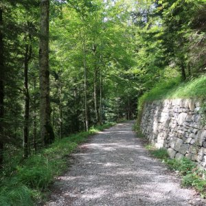 Trail to Weissenburgbad