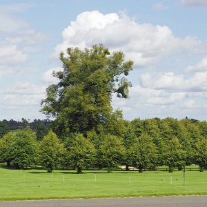 Burghley House - Capability Brown parkland