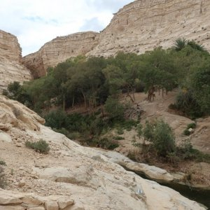 En Avdat National Park