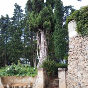 garden of the Villa Cimbrone