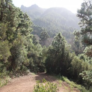 Orotava Valley Hike